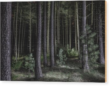 Pine Tree Forest At Night Wood Print by Dirk Ercken
