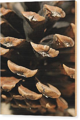 Pinecone Wood Print by The Forests Edge Photography - Diane Sandoval
