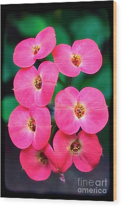Pink Orchid Crown Of Thorns Wood Print by Sue Melvin