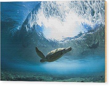 Pipe Turtle Glide Wood Print by Sean Davey