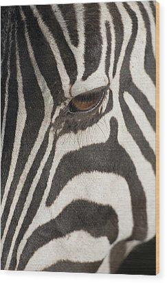 Plains Zebra (equus Burchelli), Close-up Of Eye Wood Print by Paul Souders