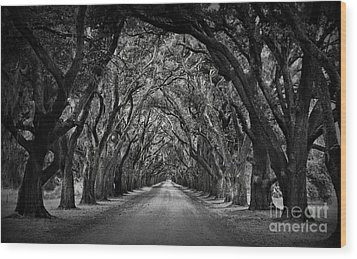 Plantation Oak Alley Wood Print by Perry Webster