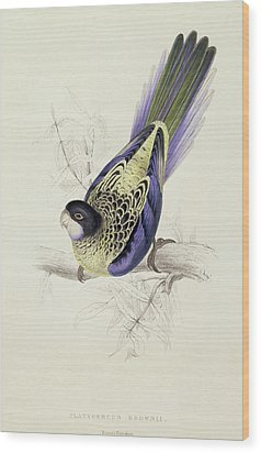 Platycercus Brownii, Or Browns Parakeet Wood Print by Edward Lear