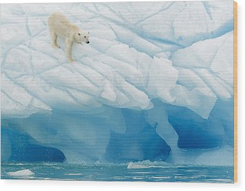 Polar Bear Wood Print by Joan Gil Raga