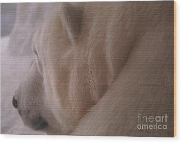 Polar Dream Wood Print by Linda Shafer