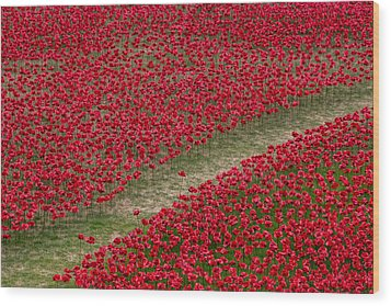 Poppies Of Remembrance Wood Print by Martin Newman