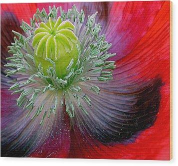 Poppy Wood Print by David April