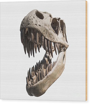 Portrait Of A Dinosaur Skeleton, Isolated On Pure White. Wood Print by Caio Caldas