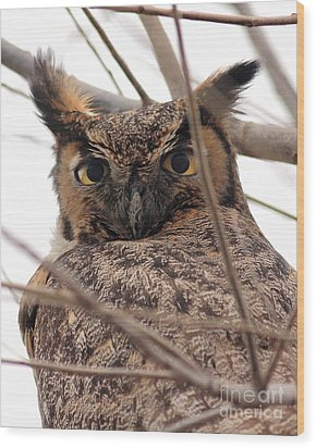 Portrait Of A Great Horned Owl Wood Print by Wingsdomain Art and Photography