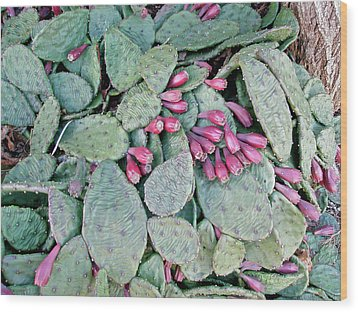 Prickly Pear Cactus Fruits Wood Print by Mother Nature