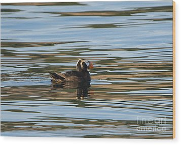 Puffin Reflected Wood Print by Mike Dawson