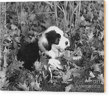Puppy In The Leaves Wood Print by Kathleen Struckle
