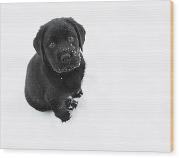 Puppy In The Snow Wood Print by Larry Marshall