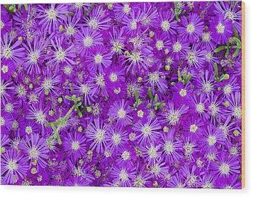 Purple Flowers Wood Print by Frank Tschakert