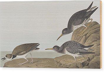 Purple Sandpiper Wood Print by John James Audubon