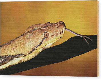 Python Wood Print by Donna Kennedy