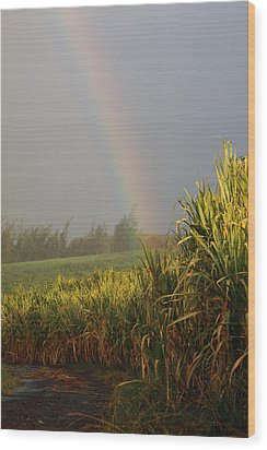 Rainbow Arching Into Field Behind Stream Wood Print by Stockbyte