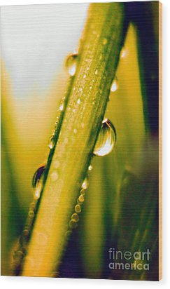 Raindrops On A Blade Of Grass Wood Print by Mariola Bitner