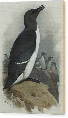 Razorbill Wood Print by Archibald Thorburn