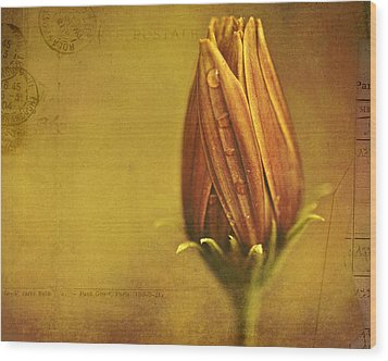 Recollection Wood Print by Bonnie Bruno