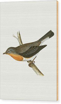 Red Breasted Flycatcher Wood Print by English School