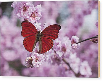Red Butterfly On Plum  Blossom Branch Wood Print by Garry Gay