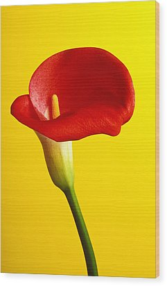 Red Calla Lilly  Wood Print by Garry Gay