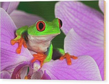 Red-eyed Tree Frog. Wood Print by Adam Jones