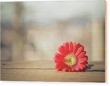 Red Gerbera Daisy Wood Print by Daniela Romanesi