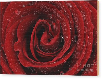 Red Rose Wood Print by Mark Johnson