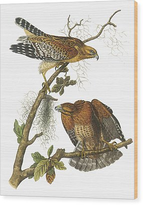 Red-shouldered Hawk Wood Print by John James Audubon