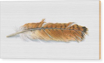 Red-tailed Hawk Feather Wood Print by Logan Parsons