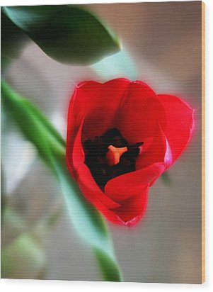 Red Tulip Wood Print by Cathie Tyler