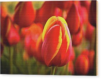 Red Tulip Wood Print by Tamyra Ayles