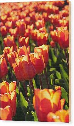 Red Tulips Wood Print by Francesco Emanuele Carucci