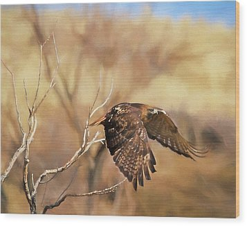 Redtail On The Move Wood Print by Donna Kennedy