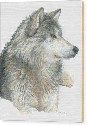Relaxing Wolf Wood Print by Carla Kurt