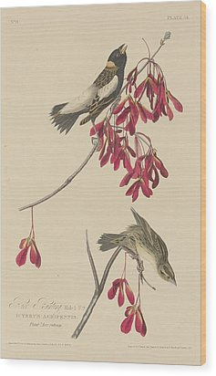 Rice Bunting Wood Print by John James Audubon