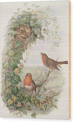 Robin Wood Print by John Gould