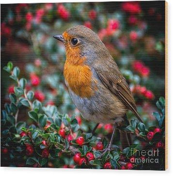 Robin Redbreast Wood Print by Adrian Evans