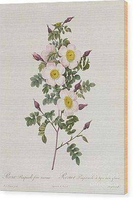 Rosa Pimpinelli Folia Inermis Wood Print by Pierre Joseph Redoute