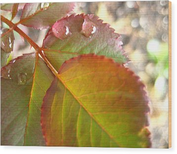 Rose Leaves Wood Print by Shirley Sirois