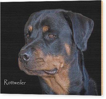 Rottweiler Wood Print by Larry Linton