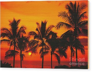 Row Of Palms Wood Print by Bill Schildge - Printscapes