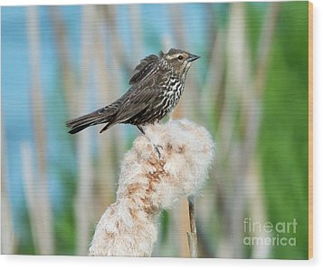 Ruffled Feathers Wood Print by Mike Dawson