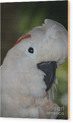 Salmon Crested Cockatoo Wood Print by Sharon Mau