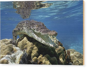 Saltwater Crocodile Smile Wood Print by Mike Parry