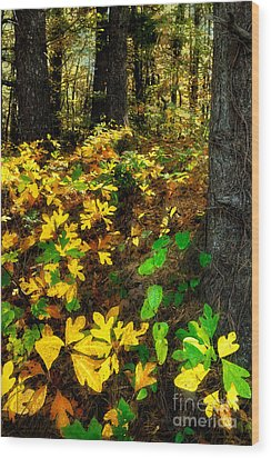 Sassafras Forest II Wood Print by Dan Carmichael