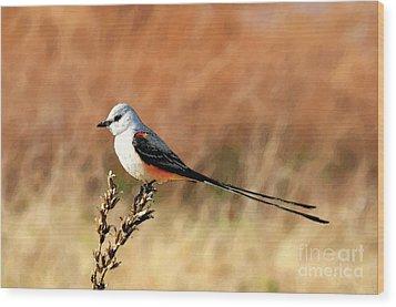 Scissor-tailed Flycatcher Wood Print by Betty LaRue