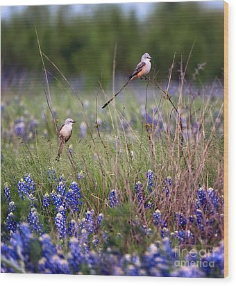 Scissor-tailed Flycatchers Wood Print by Cathy Alba